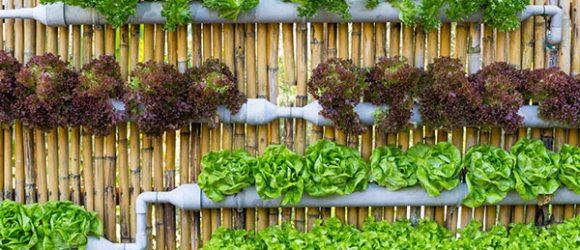 4 mô hình trồng rau tại nhà thông minh ai cũng làm được