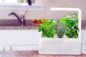 Bộ đôi máy trồng rau sạch khiến chị em mê tít vì quá thông minh