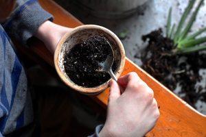 Hướng dẫn cách trồng cây nha đam bằng lá tại nhà