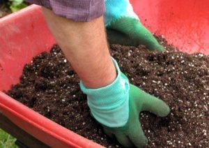 Hướng dẫn chi tiết cách trồng hoa hồng bằng hạt tại nhà