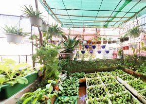 Khu vườn ngập tràn rau xanh trên sân thượng ở Hà Nội