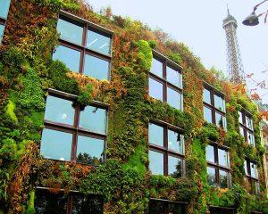 Những vườn rau đô thị xanh mát mắt ở Paris