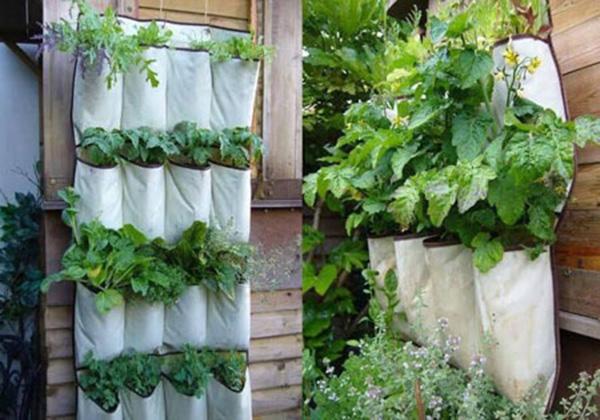 Độc chiêu trồng rau trong chai, giày nhựa, xoong nồi