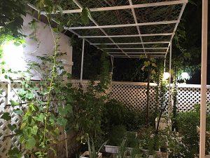 Vườn rau sạch trong biệt thự triệu đô của Thủy Tiên – Công Vinh