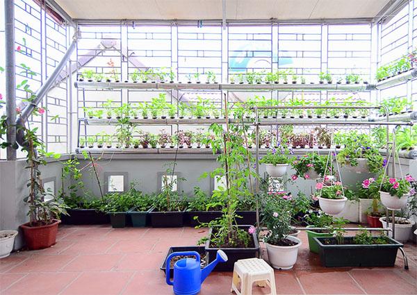 Vườn rau thủy canh trên sân thượng của cô nàng công sở tại Hà Nội