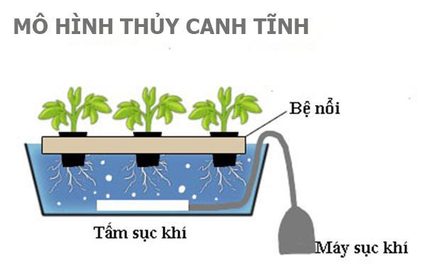 Thủy canh là gì? Tìm hiểu các mô hình trồng thủy canh
